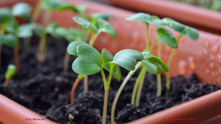 Plant een zaadje